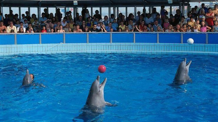 Шоу-программа с дельфинами